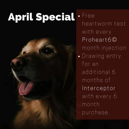 April monthly special graphic