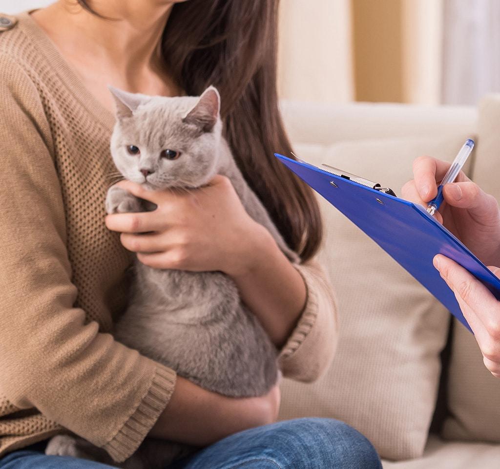 Cat checkup