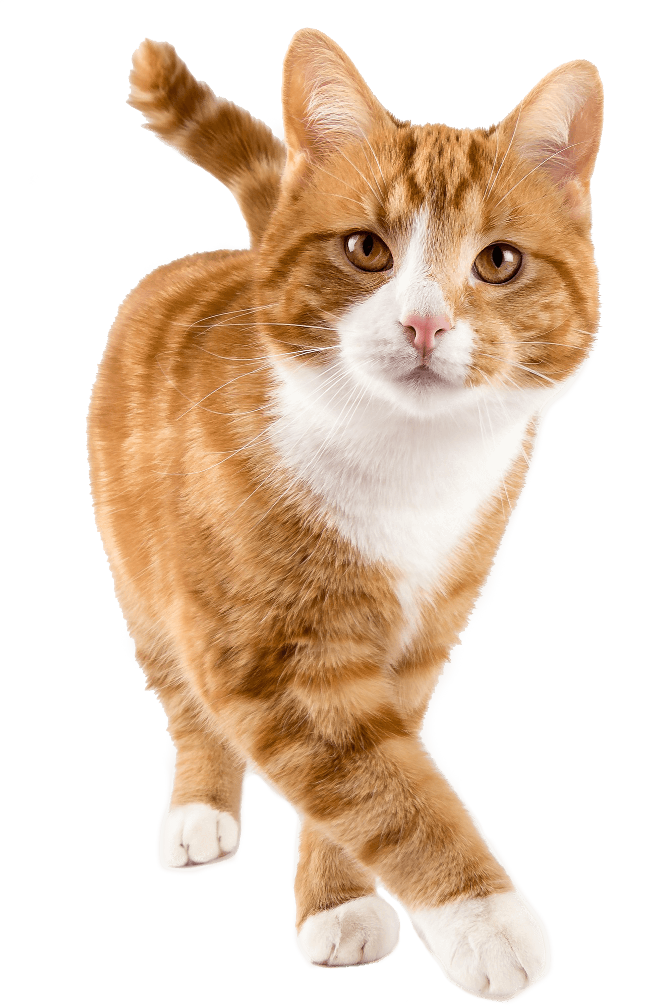 Cat Wellness
