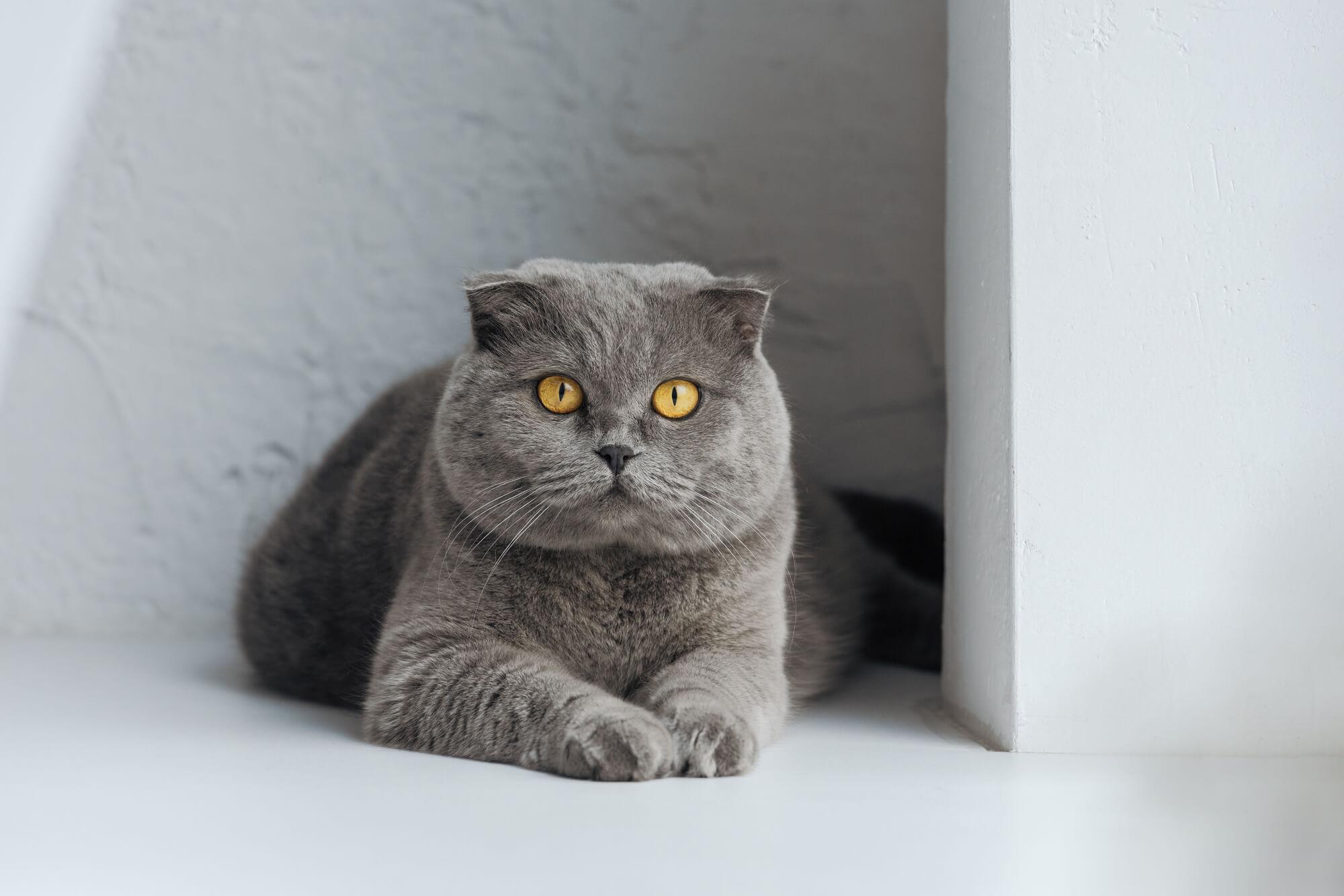 Cat Declaw 3