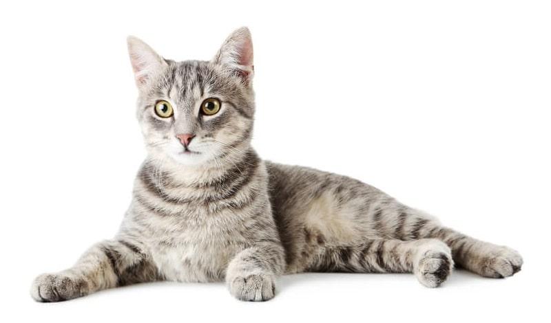 preventative-care-cats